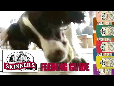 Porky pooch? Here's how much to feed your dog