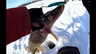 Рыбалка на алтае обь зима 2019
