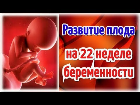 Развитие плода на 22 неделе беременности/Календарь беременности!