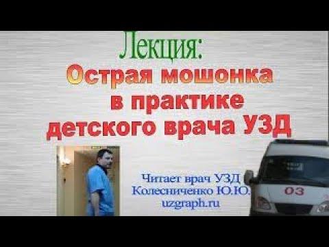 Лекция: Острая мошонка в практике детского врача УЗД