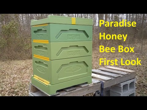 , title : '🐝 Paradise Honey Bee Box First Look 🐝