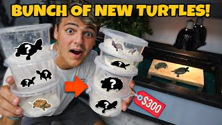 BUYING a BUNCH of EXOTIC TURTLES for My 120G POND!!
