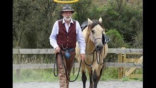 Why Do Horses Push On People?
