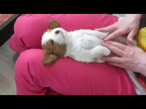 Anteprima Video Oh...ma che bel massaggio!!