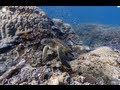 Explore the ocean with GOOGLE MAPS - YouTube