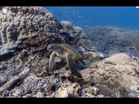 Google Maps Has Freaking Amazing Underwater Street View For The Great Barrier Reef