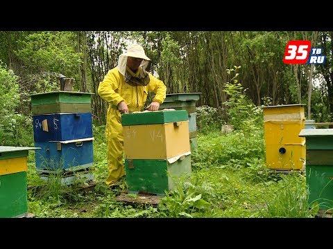 Из первых уст: опытный пчеловод дал совет, как начать медовый бизнес