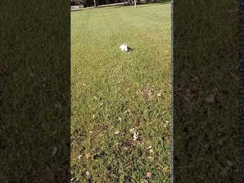 Video Of Savannas Recreation Area, FL