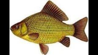 Приснилась рыба и рыбалка мужчине