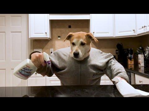 כלב מצחיק מציג את שגרת החיים בתקופת הקורונה