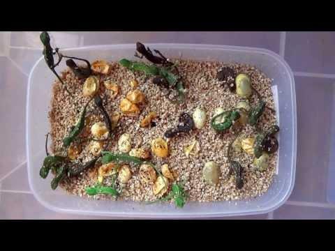 Gyomnövény paraziták és védekezési intézkedések