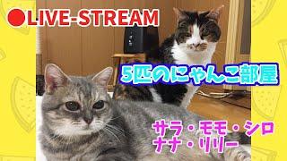 Live Stream of Rescue Cats【猫部屋ライブ★LIVE】5匹のにゃんこ部屋ライブ!