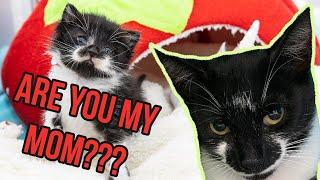 Full Circle: Finding a Kitten's Family!