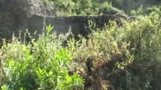 preview picture of video 'اب الشعر قرية المحاقره'