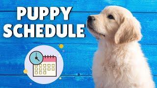 Puppy Schedule - Daily
