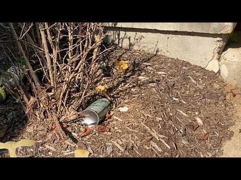Home Treatment for Yellow Jackets Goes Wrong...