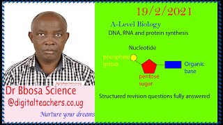 DNA, RNA and protein synthesis structured questions