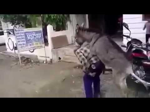 Donkey fucks old man funny video