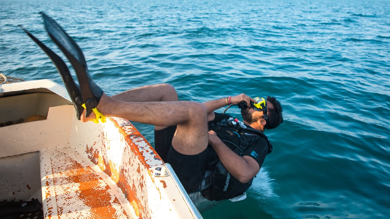 Dwarka Dolphin Exploration Video