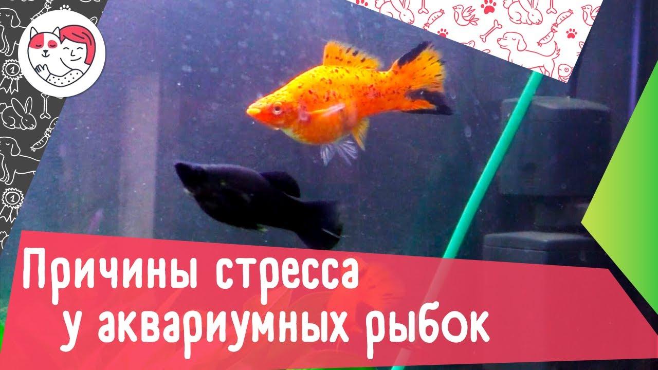 7 причин стресса у аквариумных рыбок