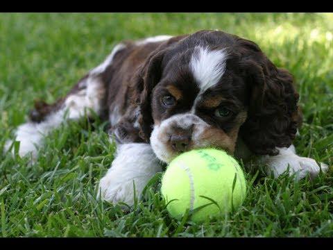 p/ cães: Brinq. Interativo