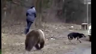 Смотреть онлайн Мужчина чудом спасается от голодного медведя
