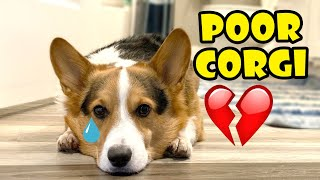 POOR CORGI Crying From Mysterious Injury -- Taken To Vet || Life After College: Ep. 679