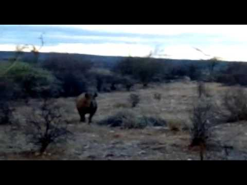 Bit of a shaky video - for very good reason! This footage shows just how up close and personal you can get to the black rhino when tracking these critically endangered creatures on foot with our Saruni guides in Sera Community Conservancy.