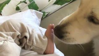 Смешные животные Приколы с животными Смешные Кошки и Собаки Калейдоскоп за 19 11 2018