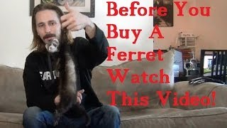 BEFORE you BUY a FERRET watch this VIDEO!