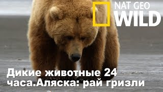Nat Geo Wild: Дикие животные 24 часа.Аляска: рай гризли / Wild 24
