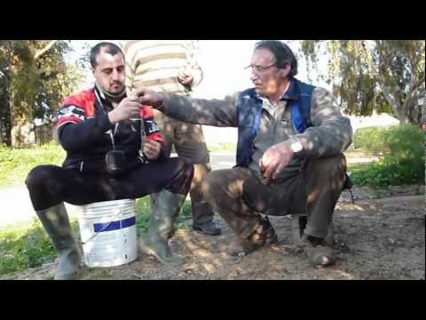 I vermi che trasferiscono zanzare