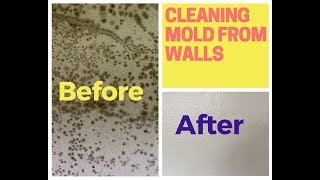 How To Remove Mold From Walls (Drywall) - Video Youtube