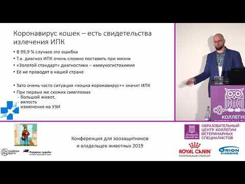 Скороходов В. А. - Коронавирус кошек