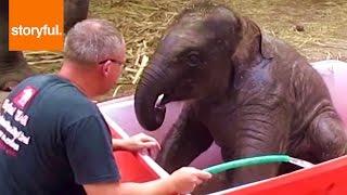 Смотреть онлайн Как в зоопарке моют слоненка