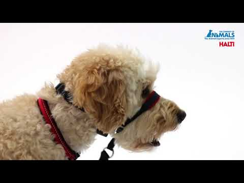 Come introdurre al cane il collare HALTI OptiFit Headcollar