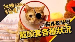 When cat wearing e-collar: Eight situation|LAMUNCATS ♤