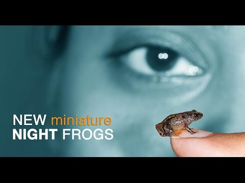 NEW Night Frogs