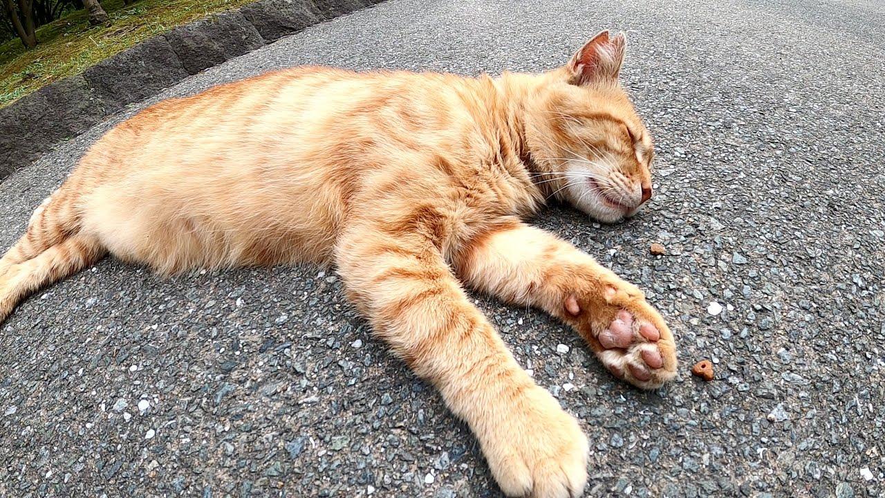 どんな夢を見ているの?爆睡中の茶トラ猫が体をピクピクと動かすwww