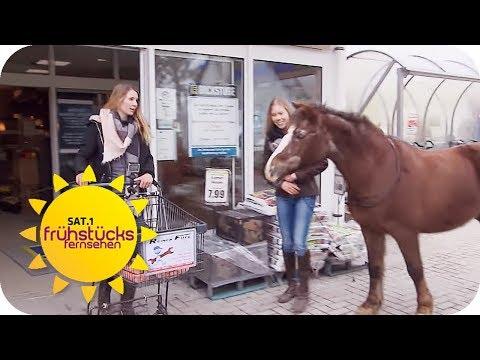 Mit Pferd im Supermarkt einkaufen gehen: Skurril oder cool? | SAT.1 Frühstücksfernsehen | TV