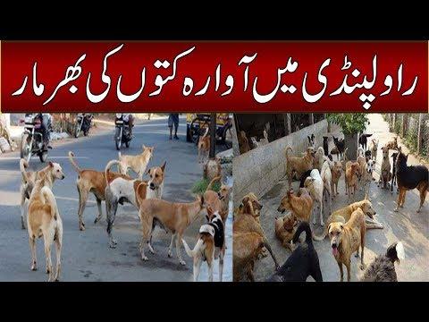 راولپنڈی میں آوارہ کتوں کی بھر مار
