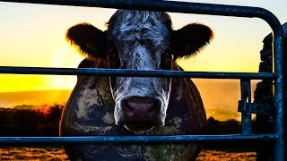 COWSPIRACY - Official Teaser 1 - HD