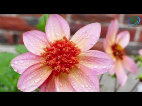 Top 10 Most Beautiful Flowers in The World // Krishi Jagran
