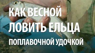 Рыба елец на что клюет