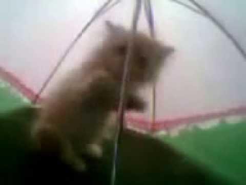 Unter einem Regenschirm am Abend mit einer kleinen süßen Katze