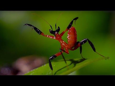 Kung-fu kudlanka vs. pavouk skákavka