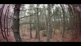 Lost in the Woods FPV