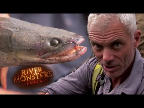 Jeremy Wade Visits A Congolese Waterside Market - River Monsters