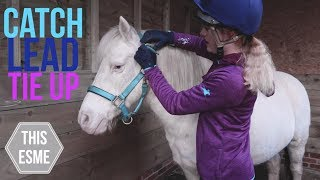 How to put on a Headcollar/Halter, Lead and Tie Up a Horse | Beginner Series | This Esme