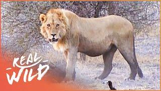 Chief Islands | Botswana